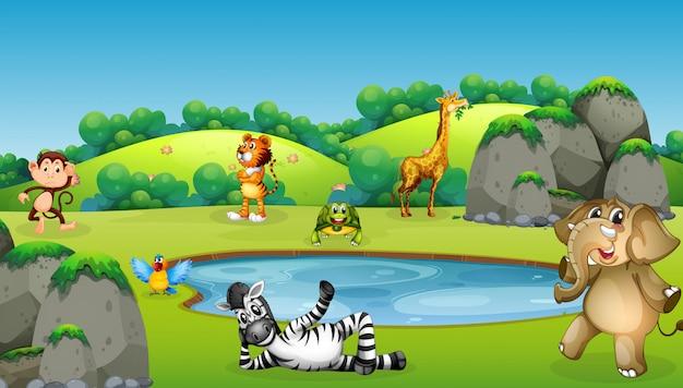 Animaux autour de la scène de l'étang