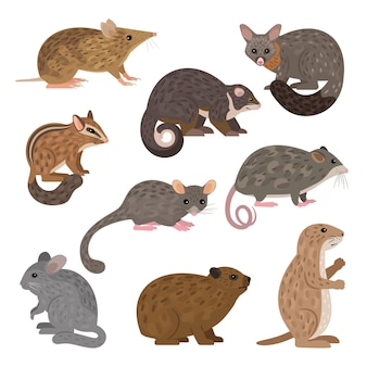 Animaux carnivores africains. leadbeater possum chinchilla chipmunk chien de prairie mountain pygmy possum possum brush-tail opossum rock hyrax bandicoot barré de l'est possum ring-tail