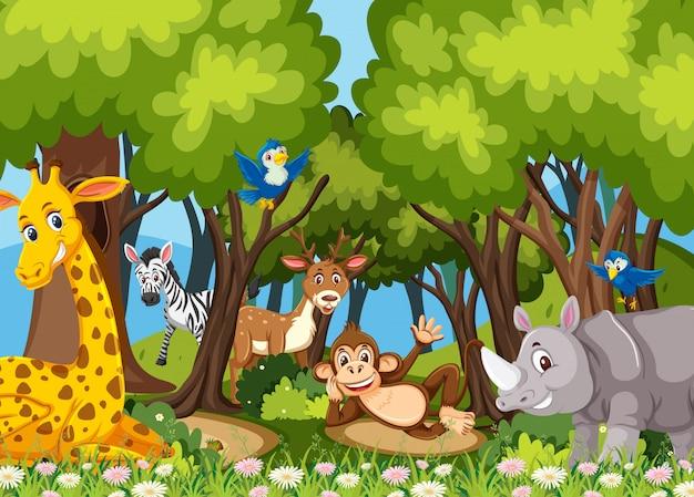 Animaux dans la jungle