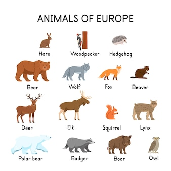 Animaux de l'europe lièvre pic hérisson ours loup renard castor cerf wapiti écureuil lynx ours polaire hibou sanglier blaireau sur fond blanc