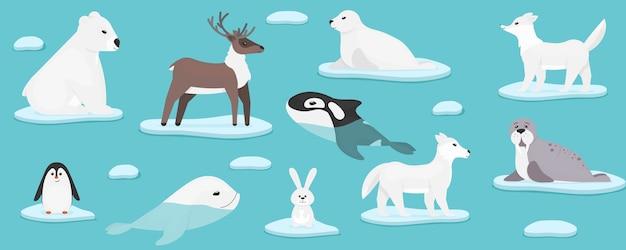 Animaux marins de l'arctique