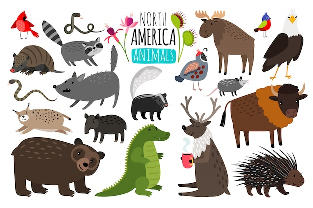 Animaux nord-américains