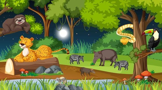 Animaux sauvages dans la forêt naturelle à la scène de nuit