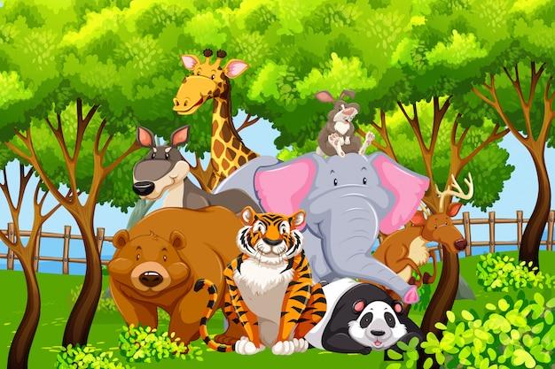 Animaux sauvages dans la nature