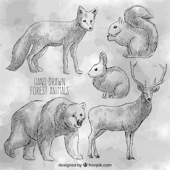 Animaux sauvages dessinés à la main