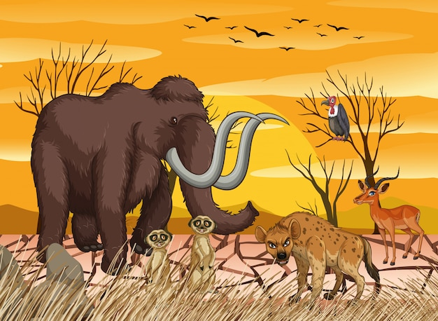 Animaux sauvages en forêt sèche