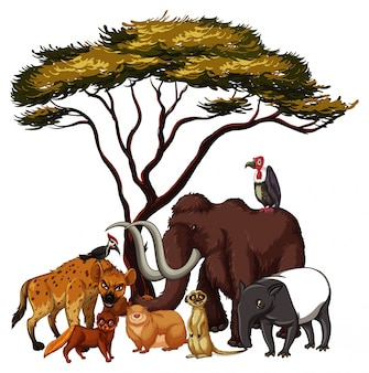 Animaux sauvages isolés sous l'arbre