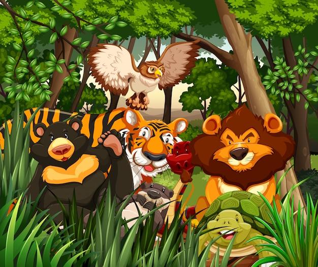 Animaux sauvages vivant dans la jungle