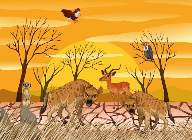 Animaux sauvages vivant en terre sèche