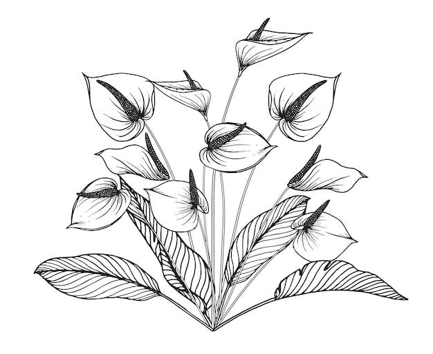 Anthurium fleur et feuille dessin