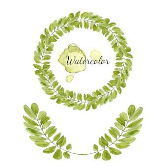 Aquarelle acacia feuilles décoration. cadre rond isolé. guirlande de vecteur dessiné à la main.