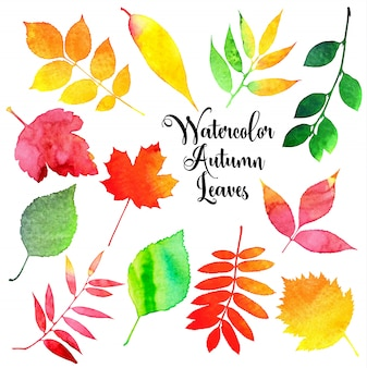 Aquarelle automne feuilles