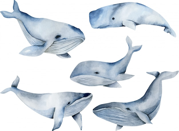 Aquarelle de baleines, collection peinte à la main