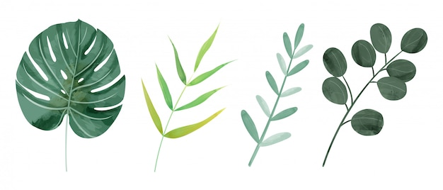 Aquarelle botanique feuilles sauvages