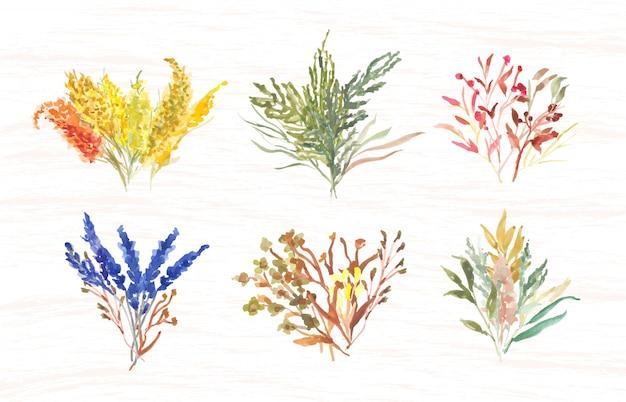 Aquarelle bouquet d'herbe