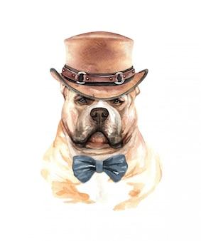 Aquarelle de chien american bully avec costume.