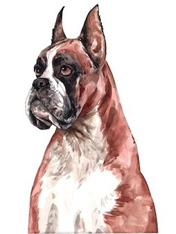 Aquarelle de chien boxer peint à la main