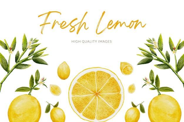 Aquarelle de citron