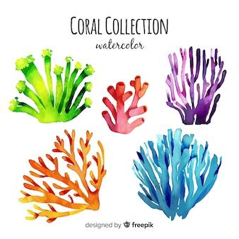 Aquarelle collection de coraux
