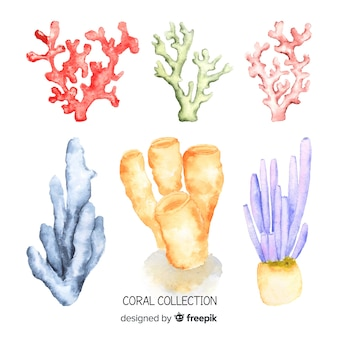 Aquarelle collection de coraux