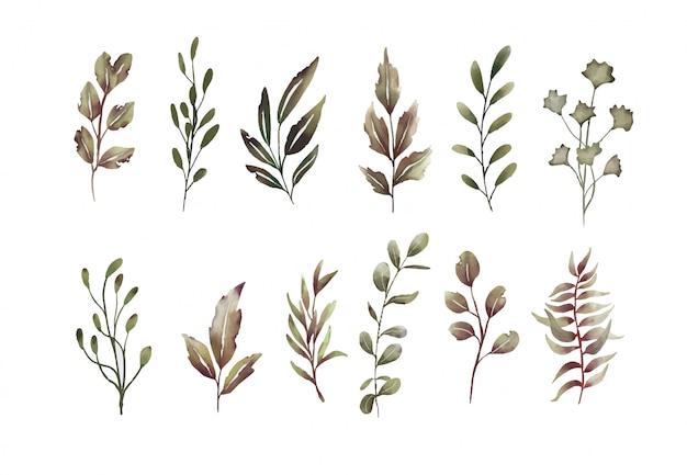 Aquarelle de collection d'éléments de feuilles séchées