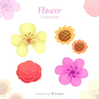 Aquarelle collection d'éléments floraux décoratifs
