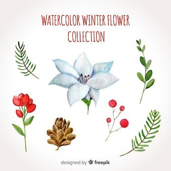 Aquarelle collection de fleurs d'hiver