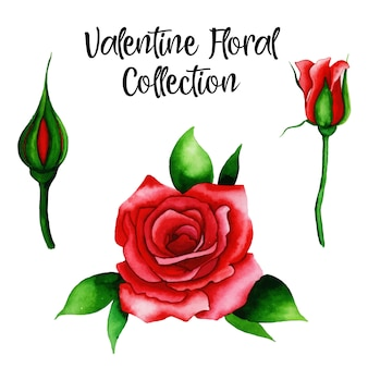 Aquarelle collection florale saint valentin