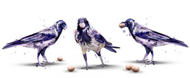 Aquarelle de corbeaux
