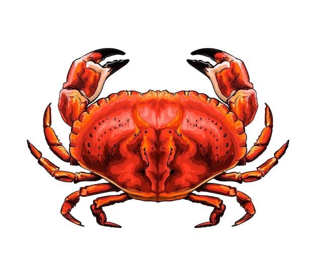 Aquarelle crabe rouge sur blanc