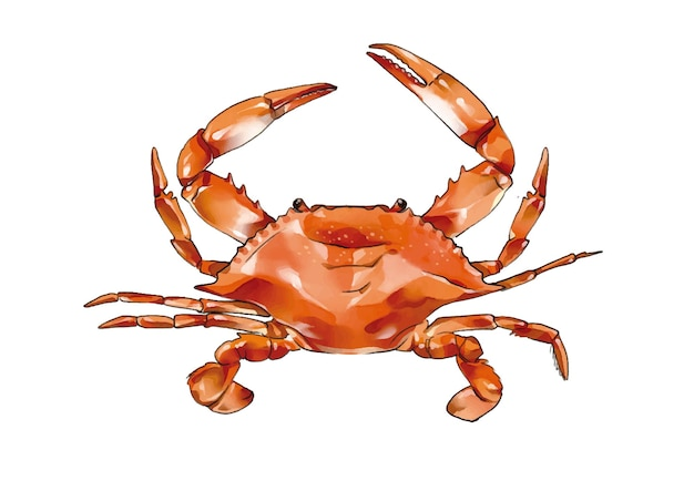 Aquarelle de crabe