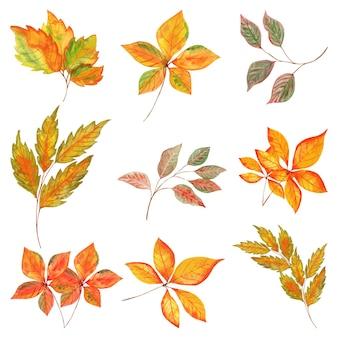 Aquarelle dessiné à la main jaune orange belles feuilles d'automne