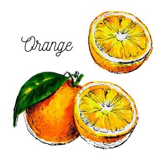Aquarelle dessinée à la main sur fond blanc. illustration de fruits orange