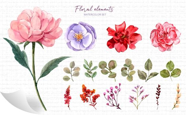 Aquarelle d'éléments floraux.