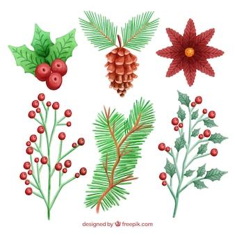 Aquarelle fleurs, feuilles, baies et pommes de pin