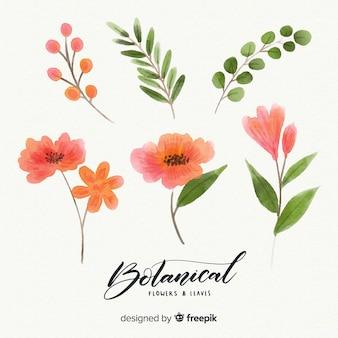 Aquarelle fleurs et feuilles botaniques