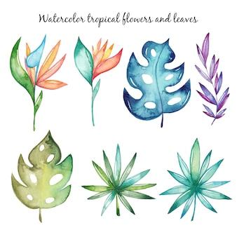 Aquarelle fleurs et feuilles tropicales