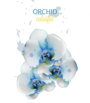 Aquarelle de fleurs d'orchidée bleue