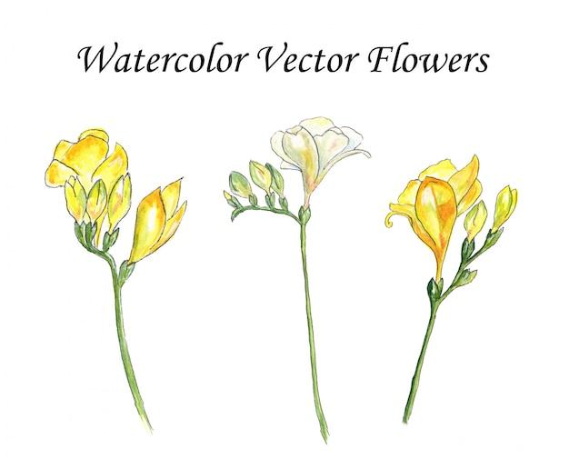 Aquarelle fleurs vecteur