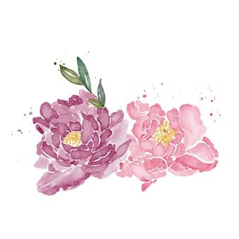 Aquarelle florale de pivoines