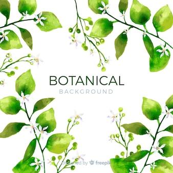 Aquarelle fond botanique