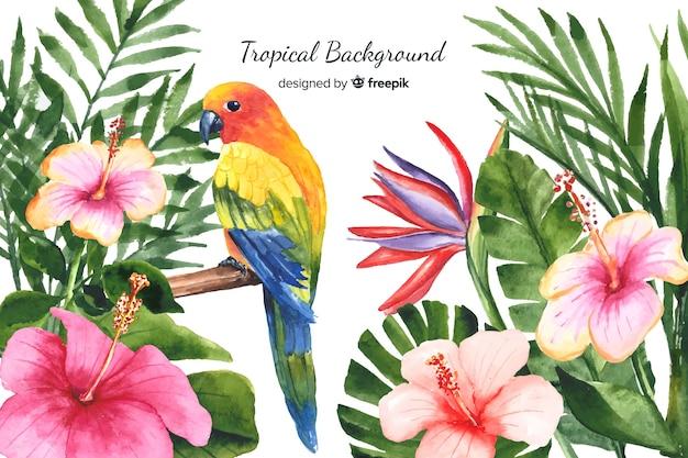 Aquarelle fond de plantes et d'oiseaux tropicaux