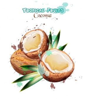 Aquarelle de fruits de noix de coco