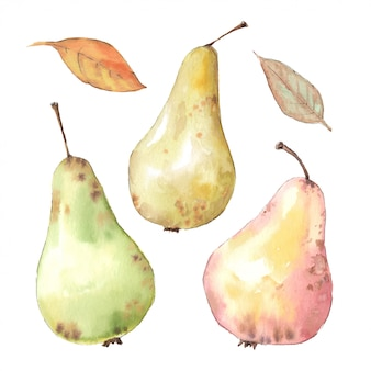 Aquarelle main dessinée illustration de poire et de feuilles.