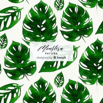 Aquarelle monstera feuilles fond