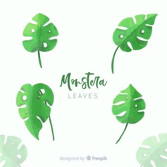 Aquarelle monstera feuilles