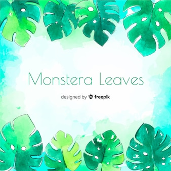 Aquarelle monstera feuilles