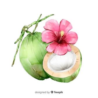 Aquarelle noix de coco