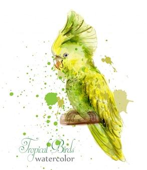 Aquarelle d'oiseau perroquet jaune tropique