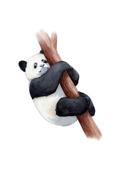 Aquarelle peinte à la main panda géant